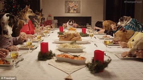 dog eating at table vdeo shows humanised rescue dogs around a table to enjoy
