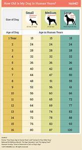 how to calculate your dogs age