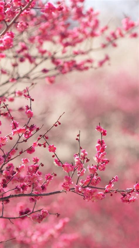 cool pink blossom nature flower spring iphone