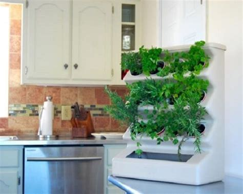 Best Images About Growing Herbs Indoors On Pinterest