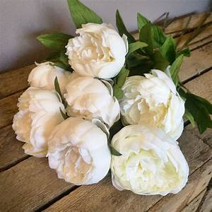 Classic Off White Peonies – Bunch of 7