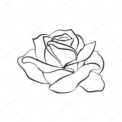 Esboço de rosa no fundo branco imagem vetorial de © Likka