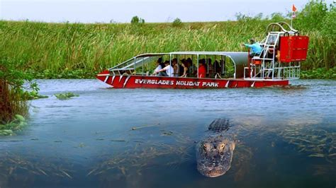 Everglades Boat Tours Alligators by South Florida S Best Alligator Adventure At Everglades