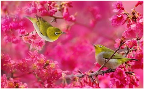 birds  flowers wallpaper birds  flowers hd
