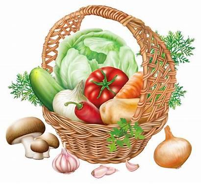 Clipart Vegetable Vegetables Transparent Basket Webstockreview