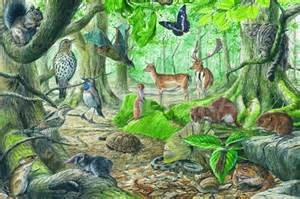 Temperate Forest Illustration
