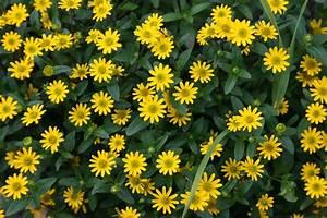 Blumen Für Garten : blumen l neblick ~ Frokenaadalensverden.com Haus und Dekorationen