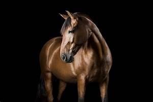 Downloaddauer Berechnen : pferde studio ~ Themetempest.com Abrechnung