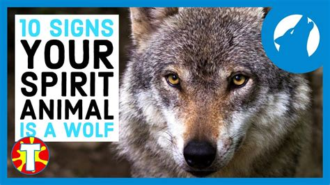 What Is Your Spirit Animal? Wolf Edition