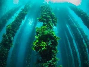 Play - Teams - Sea Algae
