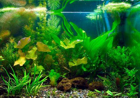 aquariophilie eau douce choisir aquarium