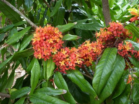 whole year flowering plants plant