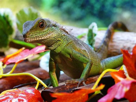 Guide to Owning Exotic Pets in the Philippines ...