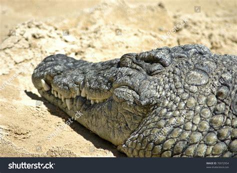 White Crocodile Leather Wallpaper