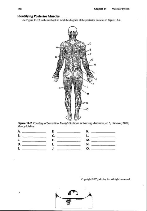 13 Best Images Of Muscle Labeling Worksheet  Label Muscles Worksheet, Human Body Muscle Diagram