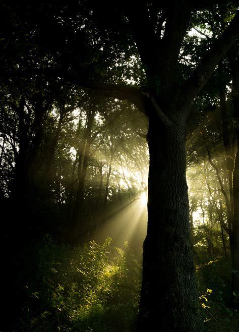 sunray  trees  stock photo