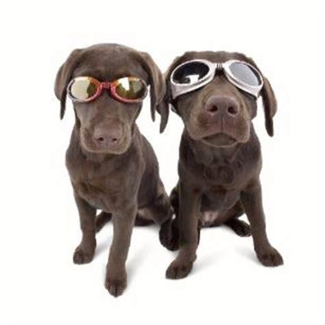 hunde sonnenbrillen  bestellen bei society dog