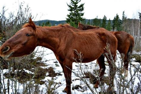 Horse Box Catering Trailer For Sale Caribou Coffee Zeytinburnu Food Menu Waukesha Las Vegas And Einstein Bros Bagels Jakarta Zomato Vikings Death Wish Aliexpress