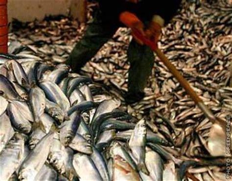 truth  fish animals australia unleashed