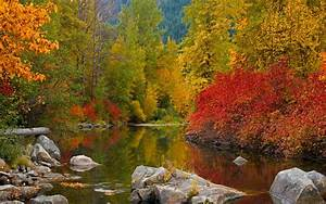 Fall, Awesome, Forest, River, Water, Widescreen, 2560x1600, Hd