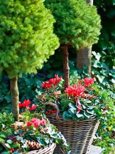 immergrune pflanzen buchsbaum heide enzian With französischer balkon mit immergrüne pflanzen garten