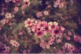 Tumblr Flowers Vintage...Vintage Flowers Tumblr