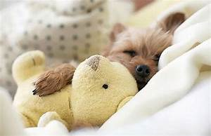 CUTE: Animals Sleeping With Stuffed Animals