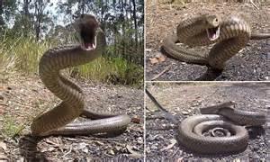 Dog Attacks Snake
