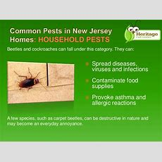 Common Type Of Pests In New Jersey Homes By Heritage Pest