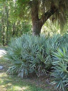 Web Exclusive Betsy Speerts Tropical Florida Home by Florida Friendly Landscaping Florida Plants Florida