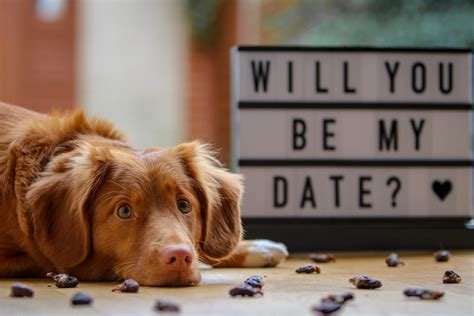 dog friendly date night dont leave home