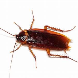 Kakerlaken ähnliche Insekten : maag garden sch den kakerlaken ~ Articles-book.com Haus und Dekorationen