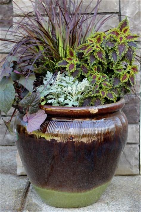 mavis garden ideas for summer container gardening