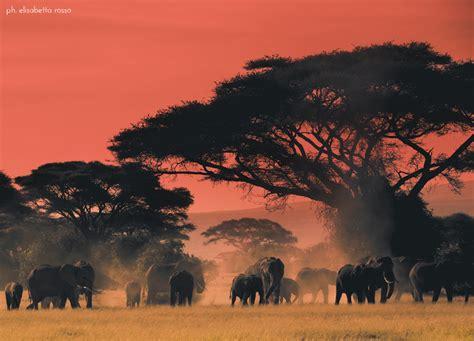 africa foto immagini paesaggi albe  tramonti