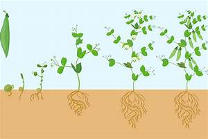 How Long Does Garden Soil Last