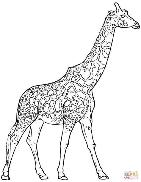 realistic giraffe coloring page  printable coloring