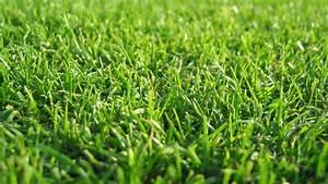 Download Wallpaper 1920x1080 grass, lawn, green Full HD ...