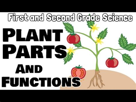plant parts  functions    grade science
