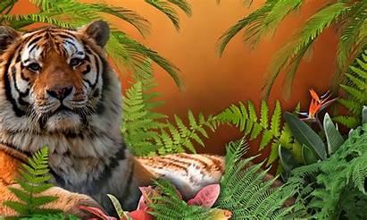 Animals Animal Pets Wild Desktop Wallpapers Cool