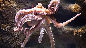 If you're not terrified of octopuses, this will change
