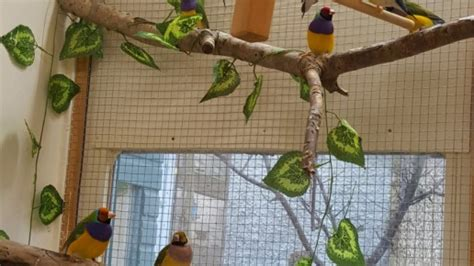 Part 2: Gouldian finch housing - Planet Aviary