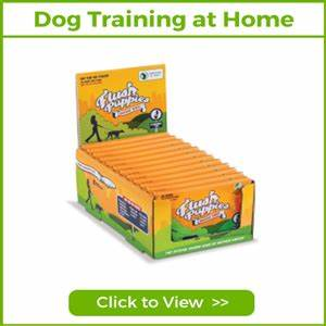 dog training at home petworld365 With dog training at home