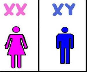 Image result for Male and Female Chromosome X and Y