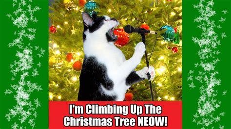 christmas tree wagon dog 1funny com