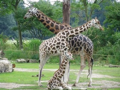 Zoologischer Garten Shisha Bar by Leipzig Zoo Zoologischer Garten Leipzig 2019 All You