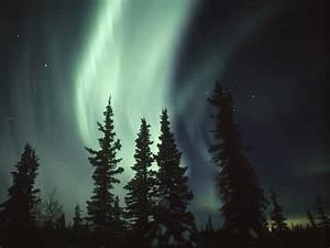 Download Wallpaper forest spruce usa pine northern lights ...