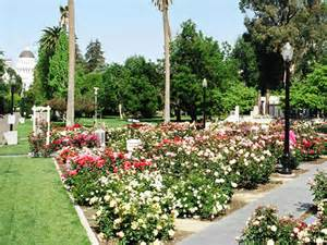 best places to see flowers this in sacramento