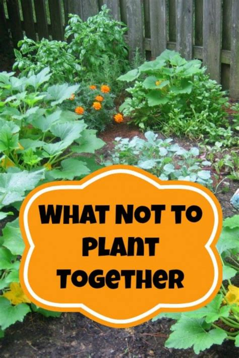 How To Plant A Vegetable Garden In Your Backyard by Companion Planting Gardens Cilantro And Vegetable Garden