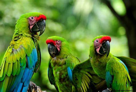 Forest Animals Live Wallpaper - tropical rainforest animals amazing wallpapers