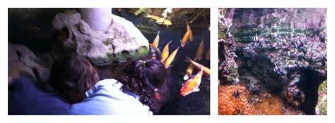 brunch aquarium de brunch aquarium de 28 images brunch aquarium de 75016 16 232 me oubruncher coup de cœur d